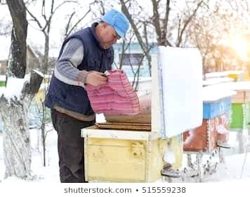Beehives in the chilly winter