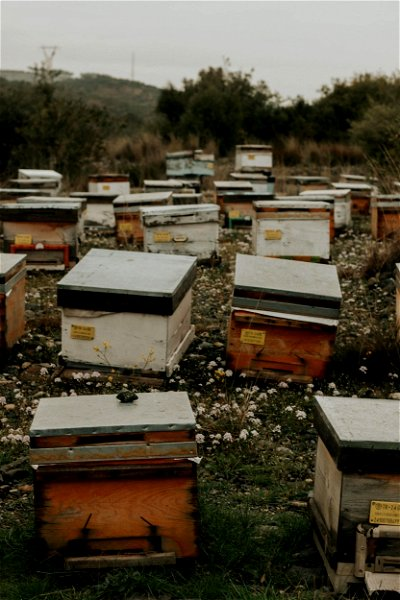 An apiary with beehives
