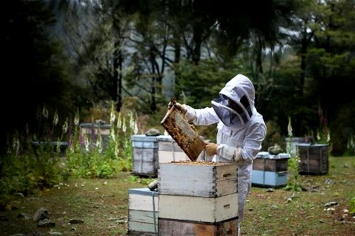 The Warre hive