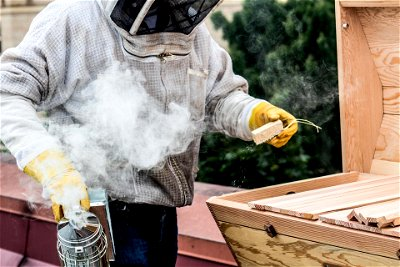 Bee smoker in action
