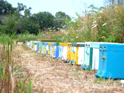 Large scale apiary
