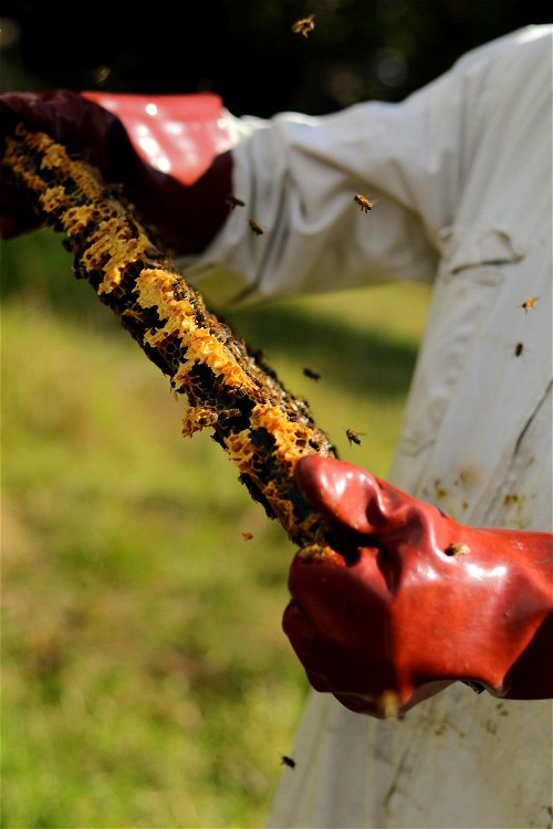 A glove for beekeepers